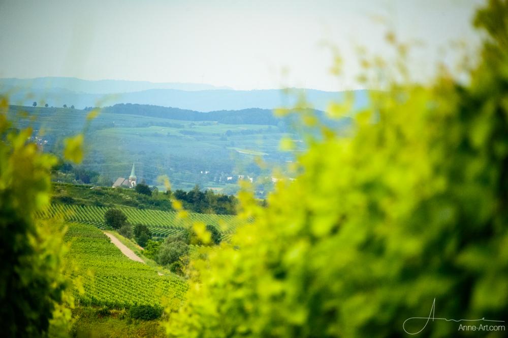 Blick vom Kaiserstuhl
