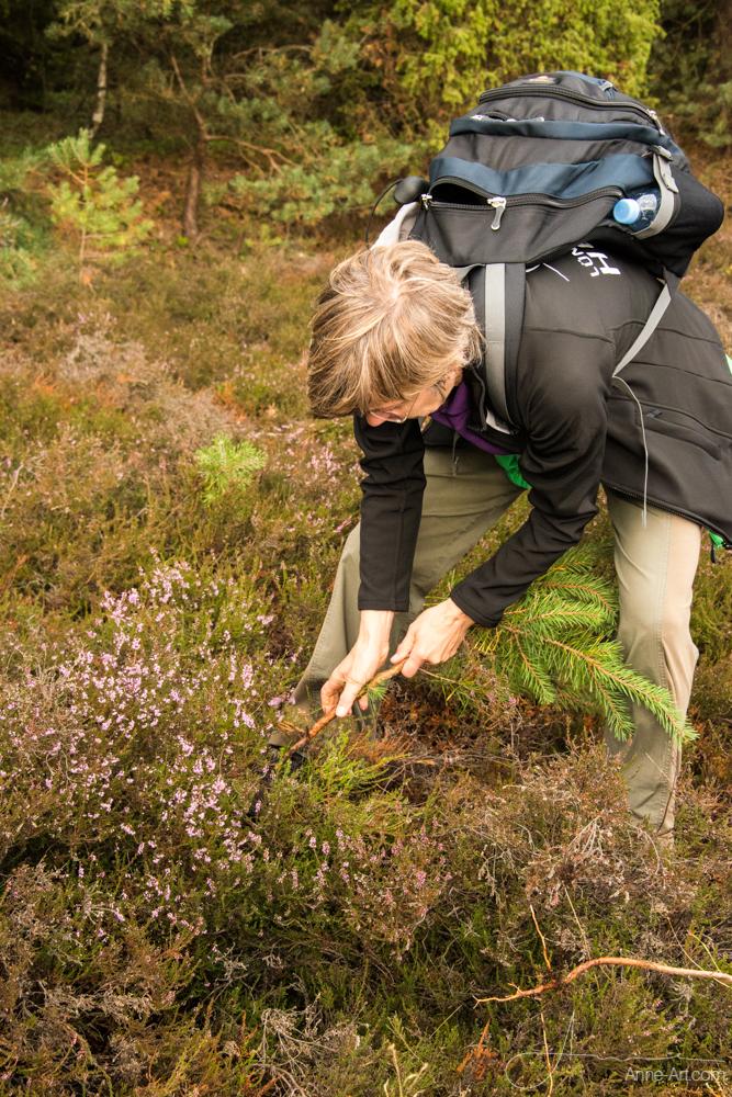 Naturführerin Petra Kloß beim Entkusseln